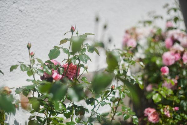 Fika på den vindskyddade innergården